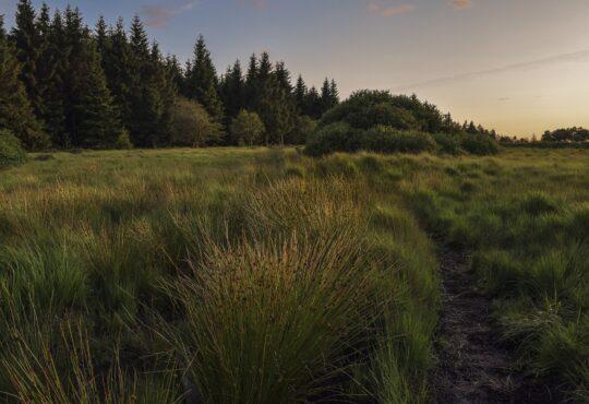 Bild von einem Moor